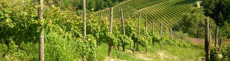 Sessanea - Italian Quality Wines