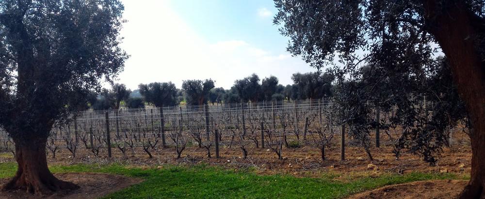 Mi-Ka Winery